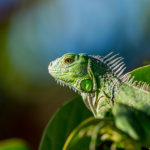 Things to Consider Before You Buy a Pet Lizards